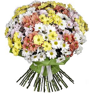 Хризантема кустовая (35 шт.) с доставкой в Омске