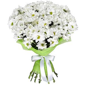 Хризантема кустовая (9 шт.)