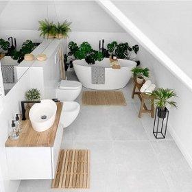 Растения для ванной комнаты без окон