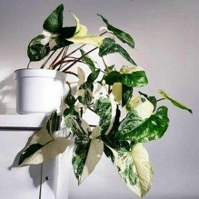 7 лучших растений для вашего дома